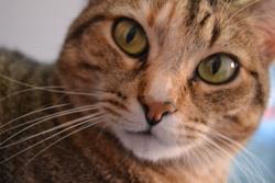 Ouria, chat Gouttière