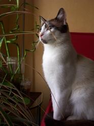 Ouarzazate, chat