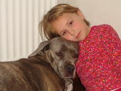 Outzia, chien Cane Corso