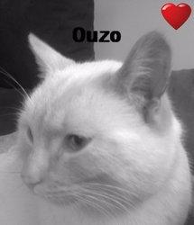 Ouzo, chat