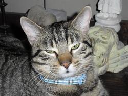 Pablo, chat Gouttière