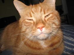 Pacane, chat Gouttière
