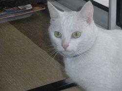 Pacha, chat Gouttière