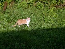 Pacha De Lisio, chat Gouttière