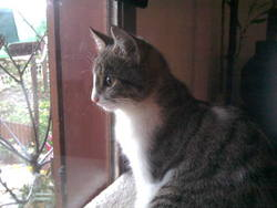 Paco, chat