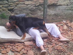 Pako, chien Rottweiler