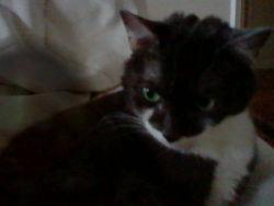 Palmyre, chat Gouttière