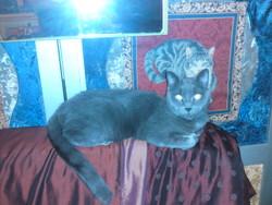 Paméla, chat