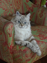 Pamina, chat Gouttière