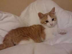 Pamplemousse, chat Gouttière
