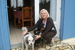 Pampy Male    , chien Bichon havanais