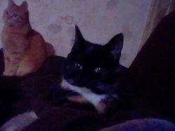 Pan, chat Gouttière