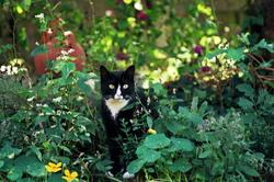 Panpan, chat Gouttière