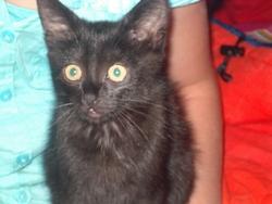 Panthéro, chat Gouttière