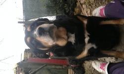 Pantheur, chien