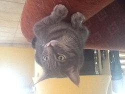 Pantoufle, chat Gouttière