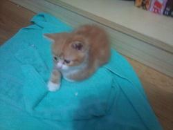 Papate, chat Gouttière