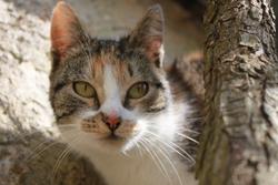 Papoutz, chat Gouttière