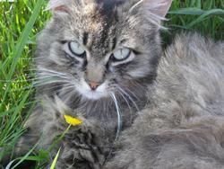 Paprenelle, chat