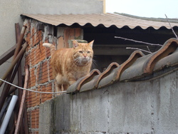 Paprika, chat Gouttière