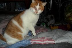 Parker, chat Gouttière