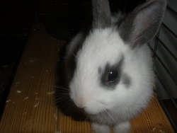Marley, rongeur Lapin