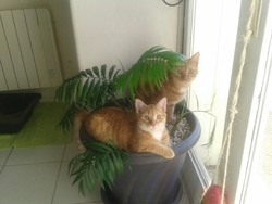 Pastis Et Cognac, chat