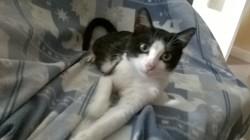 Patamon, chat Gouttière