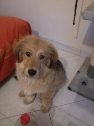 Patapouf, chien