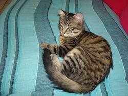 Patapouf, chat Gouttière