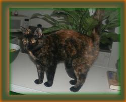 Patche, chat Gouttière