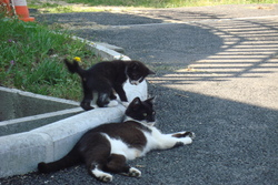 Patinnette, chat Gouttière
