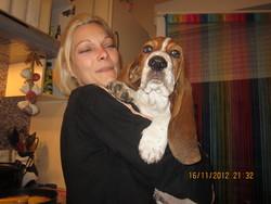 Pato, chien Basset Hound