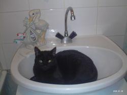 Patouche, chat