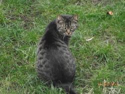 Patouche, chat Gouttière