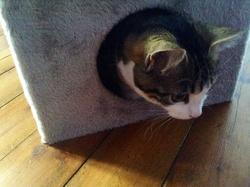Patoune Décédé , chat Européen