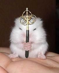 Pearl, rongeur Hamster