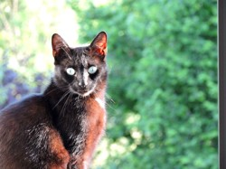 Pearl, chat Gouttière