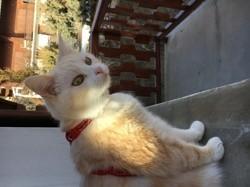 Pêche, chat Gouttière