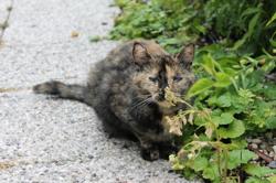 Pelote, chat Gouttière
