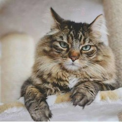 Peluche, chat