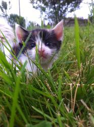 Peluche, chat Gouttière