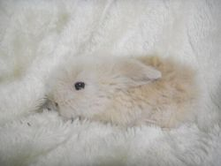 Peluche, rongeur Lapin
