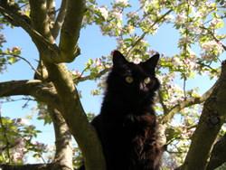 Pelut, chat Gouttière