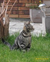 Pénélope, chat