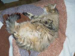 Pénélope, chat Gouttière