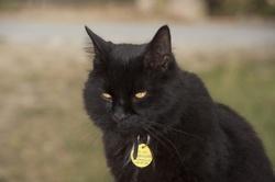 Penfield, chat Gouttière