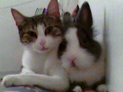 Penny, chat Gouttière