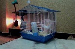 Kaya, rongeur Hamster