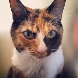 Penny Lane, chat Gouttière